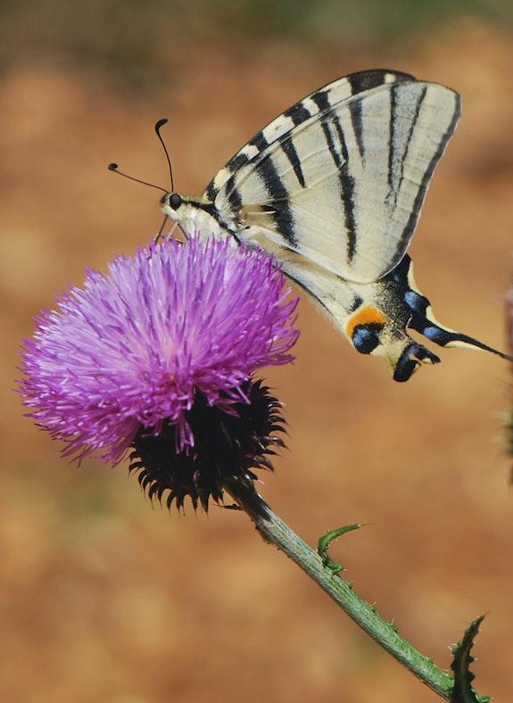 Schmetterling. Martine Dugue Martine Dugue
