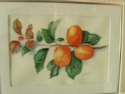 Apricot branch.
