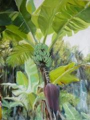 Quieres un plátano en su jardín? En la reunión de lo que es más natural.