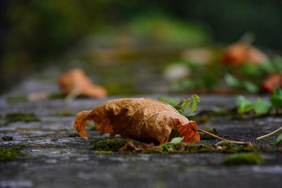 Autumn Path. Ferri Ferri