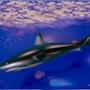 «Shark» Peinture numérique sur toile. Leslie Frank Hollander