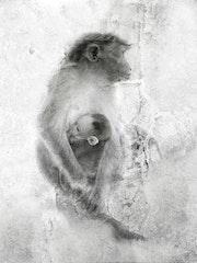 Monkey family à Koidaikanal…. La Cie Des Voyageurs/ D. Almon