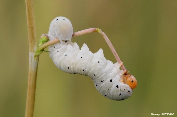 Will butterfly.  C. Deniz Seyran