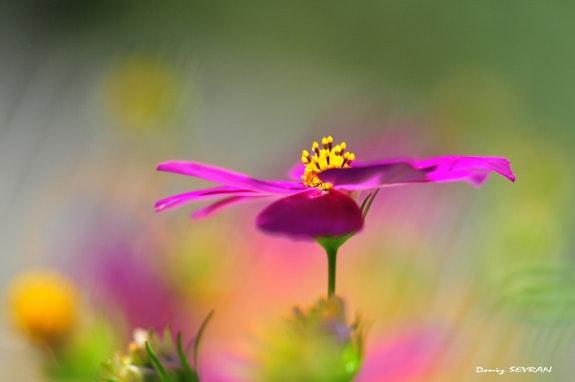 Colorful.  C. Deniz Seyran