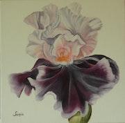 Iris 1, huile.