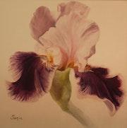 Iris 2, huile.