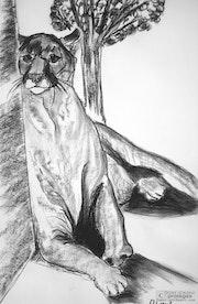 Puma, parc Challandes.. Lauferartsuisse