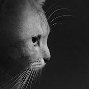 Photo portrait de chat. Julien Pepy