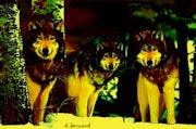 Dessin aux feutres d'une meute de loups.