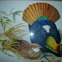 Les oiseaux exotiques d'aprés John Gould.