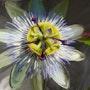 Fleur de la passion, réaliste, peinte d'aprés photo. Clément Perrenx