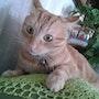 Mi adorable gato, Brus. M. Pilar
