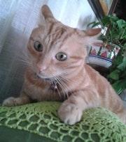 Mi adorable gato, Brus.