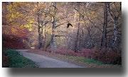Promenade d'automne.