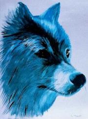 Loup bleu.