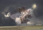 Arbre dans le brouillard. Max Parisot Du Lyaumont