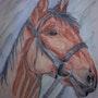 Retrato de caballo. Callisto