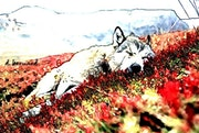 Un lobo durmiendo en el prado.