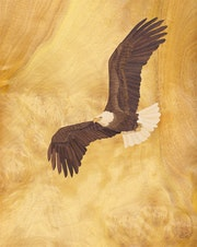 Eagle of Freedom - Marquetry. Vincent Doan