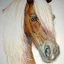 Tête de cheval «Bohémien». Alain