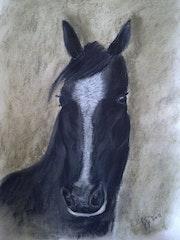 Cheval noir etoile blanche.