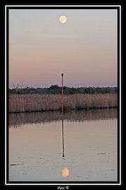 Le Teich /4 (Bassin d'Arcachon). Arno Photographies