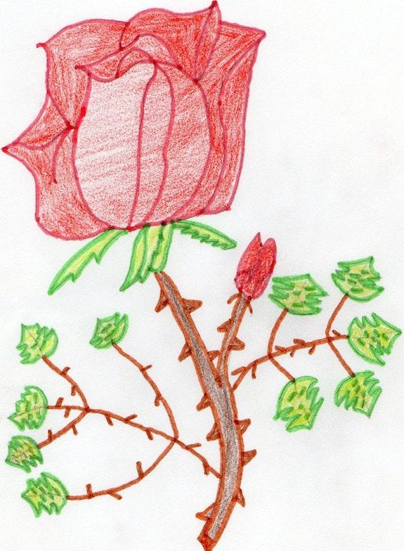 Rose.  Sandy De Brucker
