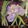 L'iris blandine. Patricia Juteau