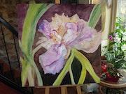 L'iris blandine.