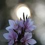 Toucher la lumière…. Ferri