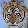 Le tigre triste. Bgib