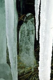 La vierge de glace.