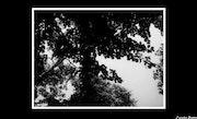 Treetops. Jessica Denton