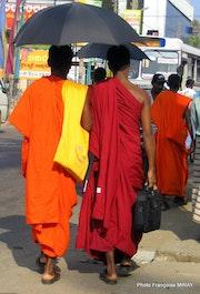 Mirissa monks of Sri Lanka.