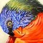 The Parrot. Diana. K