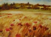 Poppies field. Alessandro Andreuccetti