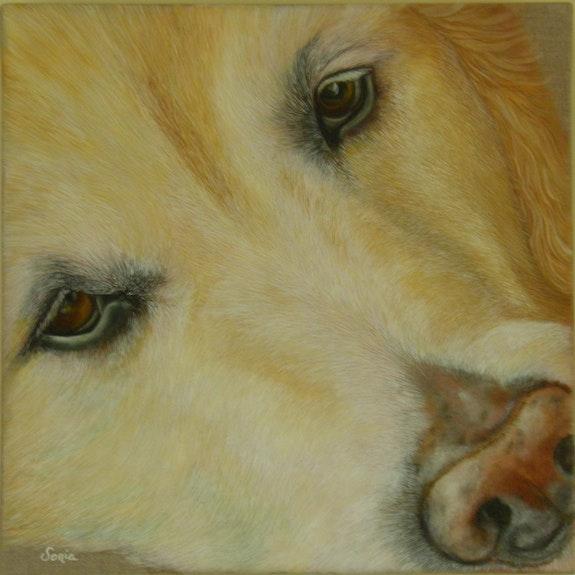 Clara, dog portrait. Sonia Sonia