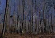 Trees imploring the heavens. Max Parisot Du Lyaumont