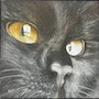 Regard ii, portrait de chat. Sonia