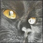 Looking ii, cat portrait.