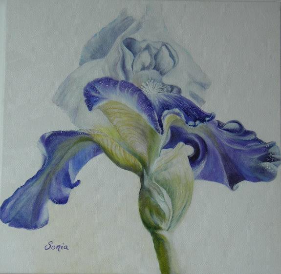 Iris Garden. Sonia Sonia