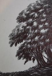 Tree study.
