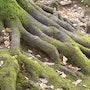 Las raíces de nuestros antepasados. Pascal Provoost