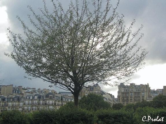 Un arbre au bord des quais.. C. Prolat C. Prolat