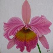 Orchidée rose.