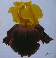 Iris jaune.