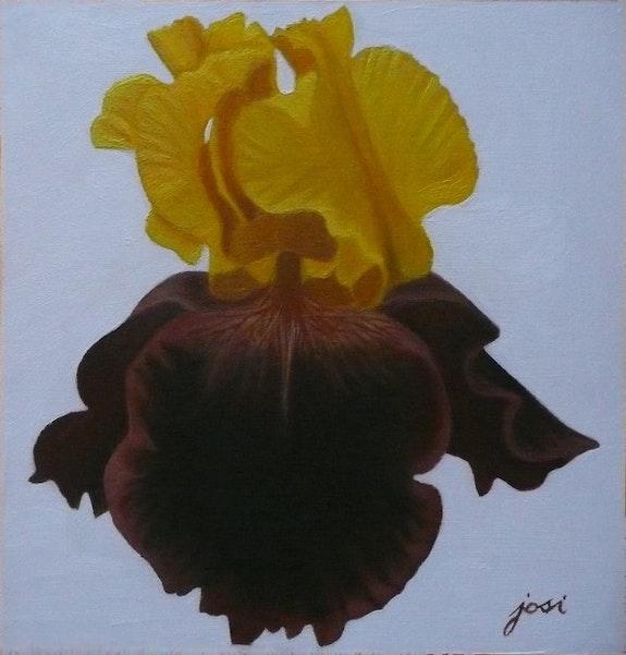 Iris jaune. Josi Josi