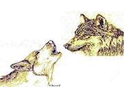 Dessin aux feutres de deux tetes de loup.