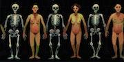 «Mémento mori n°4 »- huile sur panneau de bois. Franck-Bernard Gaulier