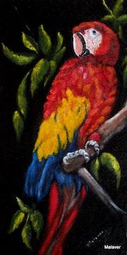 Südamerikanisches Papagay.